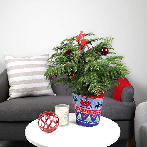4a604eb0ada0 If you are planning a lousy Christmas sweater party or if you are  attending, the ugly Christmas sweater of Costa Farms, Norfolk's pine tree  Christmas tree, ...